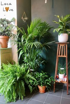 Amazing Indoor Jungle Decorations Tips and Ideas 3 You are in the right place about pet friendly house plants Here we offer you the most beautiful pictures about the cute house plants you are looking Indoor Garden, Indoor Plants, Home And Garden, Planet Decor, Interior Tropical, Jungle Decorations, Deco Jungle, Deco Nature, Decoration Plante
