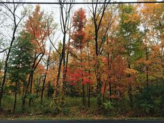 Fall in New Jersey