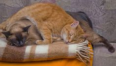 Orange cat: I'm gonna lay on you now Brown cat: How was I dragged into this again?