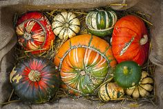 Gourds by Jacky Parker