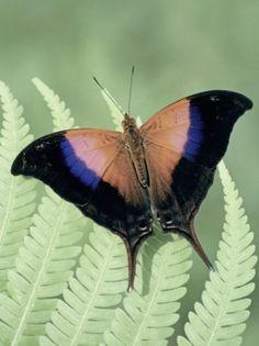 butterfly www.boneyardbakery.net