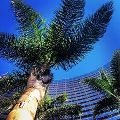 Palm tree view. Photo taken by Kris Parrish at the Marriott Marquis & Marina