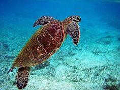 Seychellen – Desroches Island