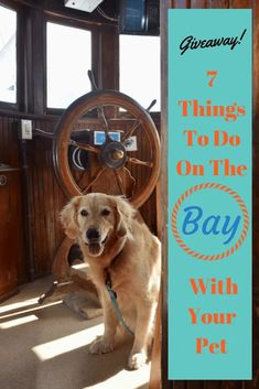The Chesapeake Bay is a fascinating area to explore with your dog. Check out our 7 favorite places to visit with pets. Chesapeake Beach Maryland, Chesapeake Bay, Fiji Travel, Hawaii Travel, Tonga, Dog Travel, Travel Usa, Beach Trip, Vacation Trips