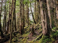 Its @jrbm.ca again testing out the new #Fujifilm #GFX50S medium format camera on an adventure to #HaidaGwaii.   Along a hike up to the lookout at Tow Hill in Naikoon Provincial Park Haida Gwaii. Stepping off the beaten path the mossy cathedral of forest quickly surrounds.   Keep following along for more updates from my Fujifilm Haida Gwaii adventure! #travel #fujifilm_x #GFX #mediumformat #FujiGoesToHaidaGwaii #myfujifilm #guestpost  via Fujifilm on Instagram - #photographer #photography…