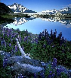 Springtime in Alaska! Read more about traveling to Alaska... www.spectrumholidays.com.au Cordova Alaska, Alaska Tours, Alaska Usa, Alaska Travel, Sitka Alaska, Alaska Trip, Nature Photography, National Forest, Beautiful World