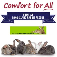 Comfort for All Finalist Long Island Rabbit Rescue