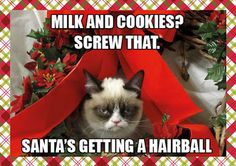 Grumpy cat frowns on your shenanigans. Grumpy cat is not impressed. I wonder if grumpy cat is an engineer. I did find some Grumpy Cat gifs: Grumpy Cat say \ Grumpy Cat Christmas, Christmas Humor, Merry Christmas, Christmas Animals, Christmas Stuff, Christmas Quotes, Christmas Vacation, Christmas Holidays, Dark Christmas