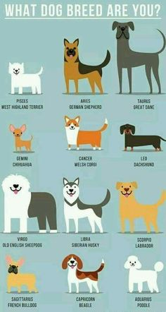 dog zodiac signs fun facts * dog zodiac signs ` dog zodiac signs astrology ` dog zodiac signs fun facts ` dog zodiac signs truths ` dog zodiac signs tattoo ` zodiac signs dog breeds ` zodiac signs as dog memes ` chinese zodiac signs dog Zodiac Signs Animals, Zodiac Signs Chart, Zodiac Signs Astrology, Zodiac Star Signs, Dog Zodiac, Zodiac Memes, Zodiac Facts, Horoscope Memes, Aries Horoscope