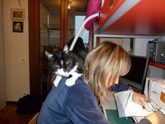 Patchwork con assistente