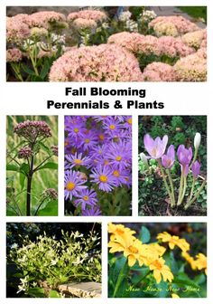 Fall Bloomers