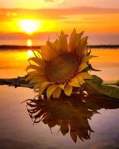 Sunrise 🌅✨