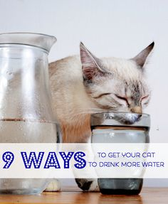 Bottoms Up! 9 Ways t