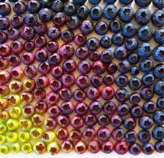 What emotions do these blueberries sorted by color spark in you?