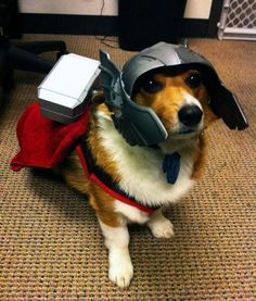 Wasn't sure if I should put this in Geek Life, or in my animals section, but it is Thorgi after all, so.......