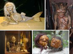 Museum of the Weird - #8 in the Top 10 Macabre Museums (FYI, some of these museums house some incredibly weird things!)
