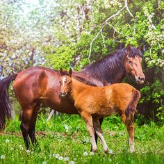 Mother horse with little foal