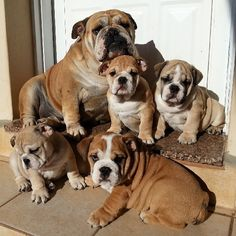 More proud single moms: | This Instagram Account (Full Of Bulldog Puppies) Will Revolutionize Your Life