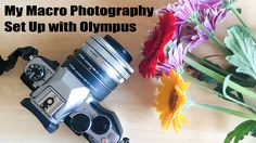 My Macro Photography Set Up with Olympus