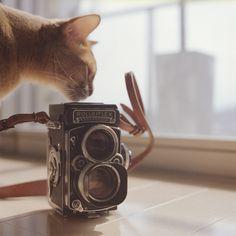 Medium format film photography by Ryoco   The D-Photo