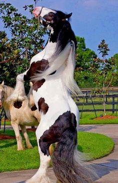 ...<3...such a beautiful horse...<3