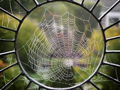 I thought this picture of a spiderweb was a good example of radial design.