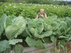 Маленькие секретики садоводу - огороднику. Добавь себе на стену, чтобы не забыть! 1. Йод для капусты. В ведро воды добавить 40 капель йода. Когда начнет формироваться кочан, поливать капусту под растение по 1 литру. 2. Ускорение пророста. Чтобы семена быстрее проросли их замачивают в растворе перекиси водорода (4%) на 12 часов (капуста), а семена помидоров и свеклы - на 24 часа. Для обеззараживания семян (вместо марганцовки) их обрабатывают 10% перекисью водорода 20 минут. Соотношение…