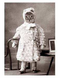 victorian photo of a cat - Google Search