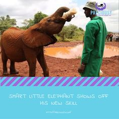 Olsekki is one precocious little elephant.  Read more: https://www.thedodo.com/elephant-holds-bottle-himself-1707520392.html?sf23651202=1