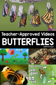 Butterfly Life Cycle Videos for Kids &; Simply Kinder Butterfly Life Cycle Videos for Kids &; Simply Kinder Kathy Thompson kjtbb bugs Butterfly Life Cycle Videos for kids. We […] to first grade transition Science Lessons, Science For Kids, Science Activities, Chemistry Experiments, Summer Science, Experiments Kids, Science Fun, Physical Science, Science Education