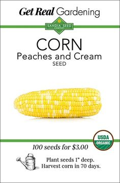 Corn - Peaches and Cream Seeds - Organic