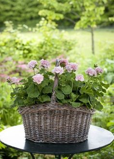 Skip the pot, use a basket- visually pleasing