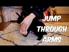 """""""Jump Through Arms"""" - Rabbit Tricks by Toby"""