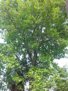 A Tree Redding California