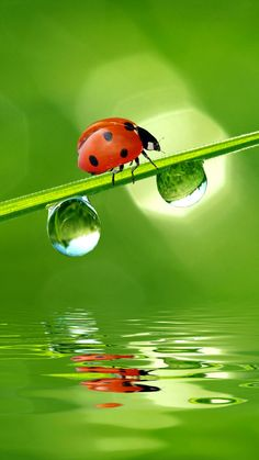 Ladybug on a blade of grass, so sweet.