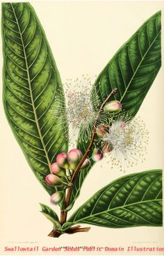 From our collection of botanical photographs, illustrations, and paintings. We hope you will enjoy these images as much as we do.