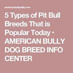 5 Types of Pit Bull Breeds That is Popular Today • AMERICAN BULLY DOG BREED INFO CENTER