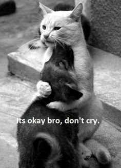 It's okay bro, don't cry. I wish my cat Luca And doggies Copper and Roxie  could be all buddy buddy like this Lol