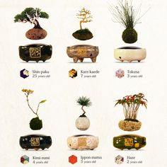 The Magnetic Air Bonsai Creates Surreal Levitating Plants
