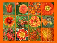 Orange Flowers-ThePa