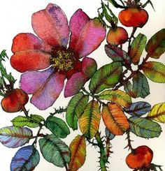 Sofia Perina Miller watercolors -