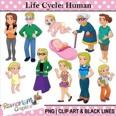 Each image is PNG & in Black & White, colored with colored outlines, colored with black outlines. Human Life Cycle, Lifecycle Of A Frog, Frog Life, First Grade Science, Human Human, Human Babies, New Clip, Early Childhood Education, Science Lessons
