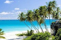 Barbados Full-day Coast to Coast Tour: ⭐⭐⭐⭐⭐ Reviewed by: Charmaine, February 2017 The tour guide Lou was very informative and professional. I had a great time on the tour. Lou made us feel like family. He interacted with everyone. A great tour of the island.
