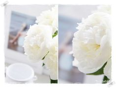 lovely white peonies