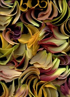 Explore horticultural art's photos on Flickr. horticultural art has uploaded 16008 photos to Flickr.