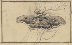 Van Gogh Tattoo, Vincent Van Gogh, Van Gogh Museum, Dutch Artists, Famous Artists, Van Gogh Zeichnungen, Van Gogh Drawings, Deaths Head Moth, Moth Tattoo