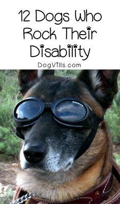 Looking for cute dog pictures that will really tug at your heartstrings? Check out these 12 dogs who absolutely rock their disability!