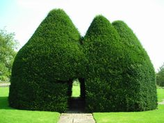 Hedge-y hut