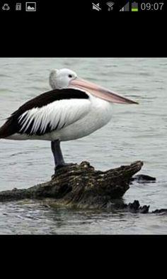 Peli can  at Berri SA Riverland