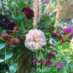 Detail of a bouquet I made with roses, Rhodochiton, Lathyrus, Sanquisorba and unripe blackberries